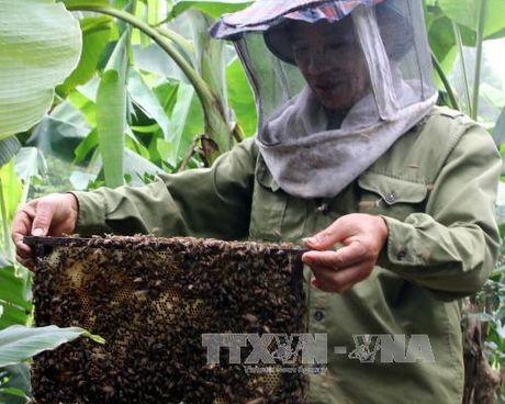 Ha Giang khong chap nhan viec mang ong ngoai vao dia ban - Anh 1