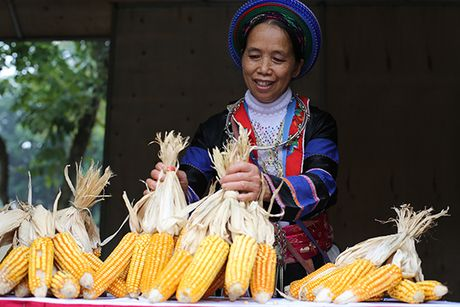 Ngam hoa tam giac mach giua long Ha Noi - Anh 10