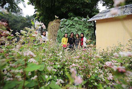 Ngam hoa tam giac mach giua long Ha Noi - Anh 1
