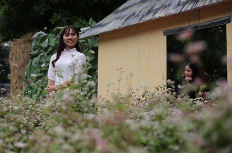 Ngam hoa tam giac mach giua long Ha Noi - Anh 2
