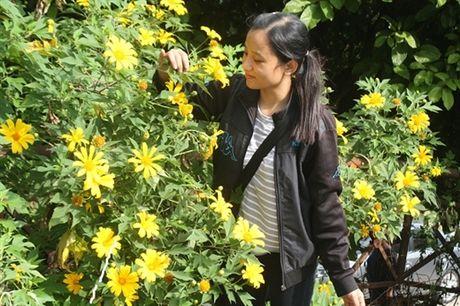 Gioi tre Ha Thanh dua nhau len Ba Vi ngam hoa Da Quy no ro - Anh 3