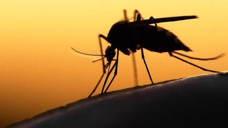Ba Ria - Vung Tau phat hien ca nhiem virus Zika dau tien - Anh 1