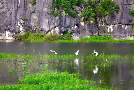 Xay dung Khu bao ton Van Long tro thanh khu Ramsar - Anh 1