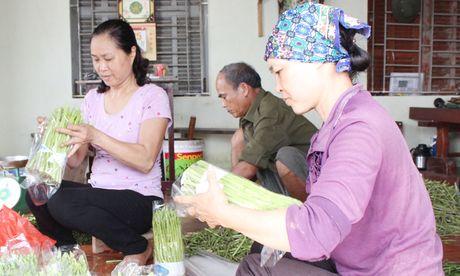Hong Thai da dang hoa cac mo hinh san xuat - Anh 1