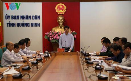 Hon 500 vu buon ban, van chuyen ma tuy duoc phat hien o Quang Ninh - Anh 1