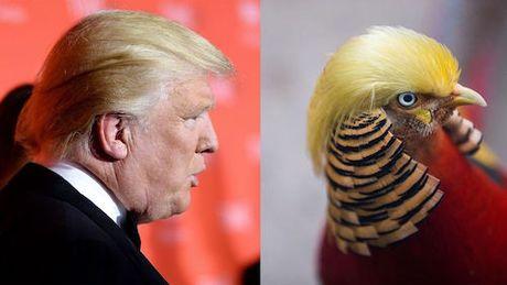 Du khach do xo toi so thu xem chim tri co 'mai toc' giong Donald Trump - Anh 1