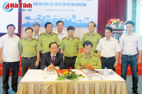 Bao ve rung tai goc o vung giap ranh Ha Tinh - Quang Binh - Anh 1