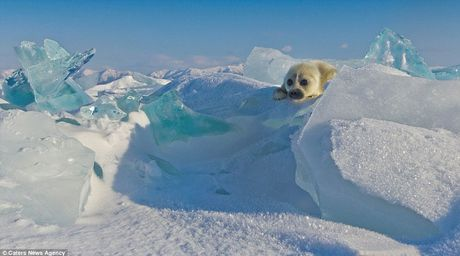 'Tan chay' truoc khoanh khac hai cau Greenland vay chao nhiep anh gia - Anh 6