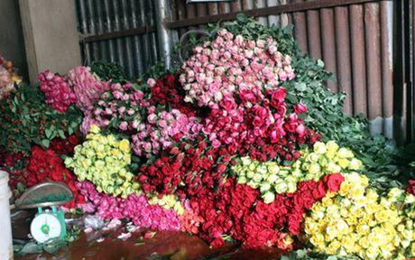Can ngay 20/11: Hoa Da Lat dong loat tang gia manh - Anh 1