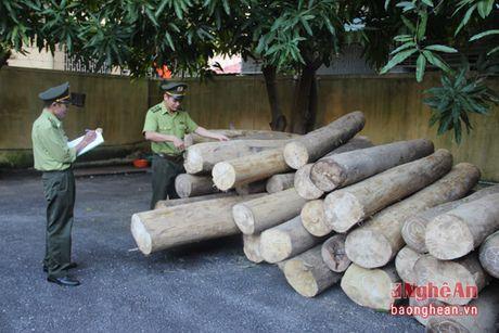 Phat 20 trieu dong do van chuyen lam san trai phep - Anh 1
