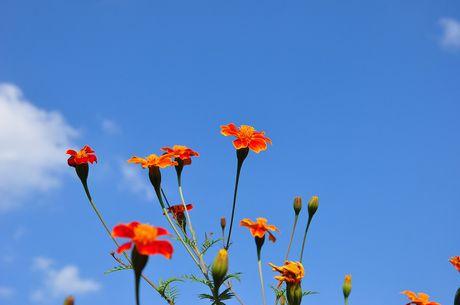 Thuong nho mua hoa cuc dai Ha Giang - Anh 4