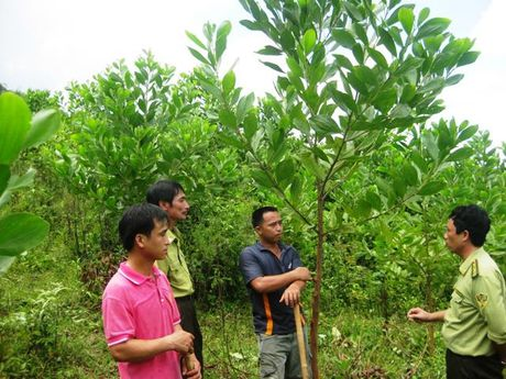 Khoi day nghi luc vuon len, thuc hien hieu qua cac chinh sach dan toc o Thanh Hoa - Anh 1