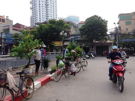 Nhoc nhan nghe ban rong cay canh - Anh 1
