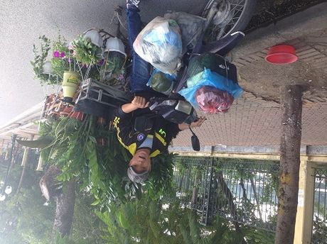 Nhoc nhan nghe ban rong cay canh - Anh 2
