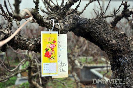 Dao tien vua chua ra hoa duoc dai gia Ha Noi bo nghin do 'mua dut' - Anh 4