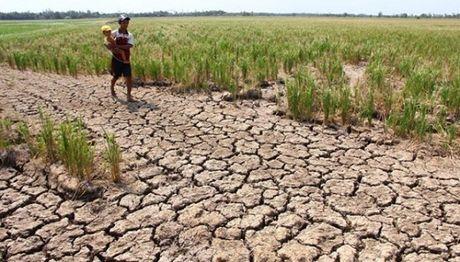 Can 25.000 ty dong de khac phuc hau qua do El Nino - Anh 1