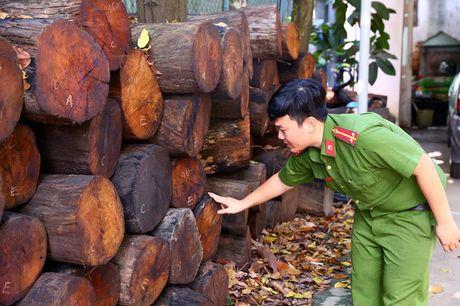 Binh Duong: Xu phat doi tuong van chuyen 301 khuc go quy hiem - Anh 1