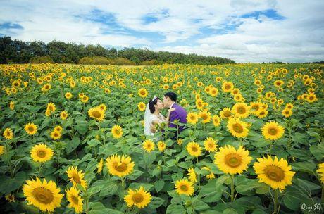 Kham pha 5 mua hoa dep khap ca nuoc trong cuoi thang 11 - Anh 10