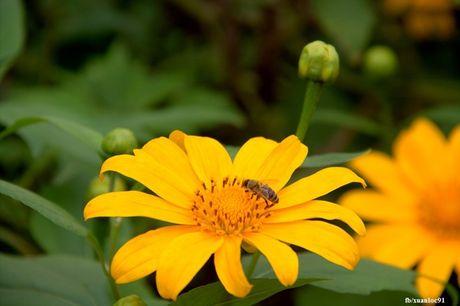 Kham pha 5 mua hoa dep khap ca nuoc trong cuoi thang 11 - Anh 1
