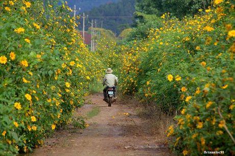 Kham pha 5 mua hoa dep khap ca nuoc trong cuoi thang 11 - Anh 2