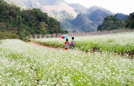 Kham pha 5 mua hoa dep khap ca nuoc trong cuoi thang 11 - Anh 3