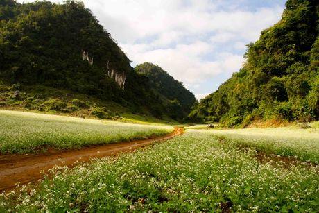 Kham pha 5 mua hoa dep khap ca nuoc trong cuoi thang 11 - Anh 4