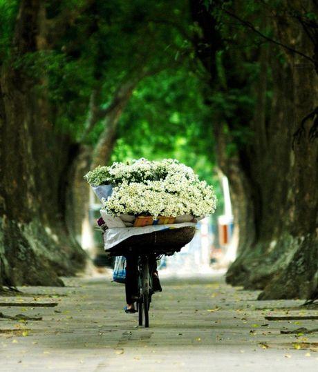 Kham pha 5 mua hoa dep khap ca nuoc trong cuoi thang 11 - Anh 6
