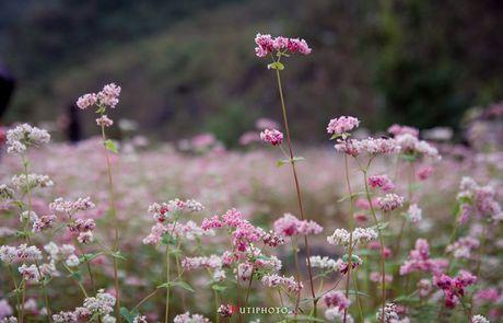 Kham pha 5 mua hoa dep khap ca nuoc trong cuoi thang 11 - Anh 8