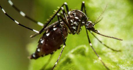 Campuchia phat hien benh Zika dau tien o tinh Campong Cham - Anh 1