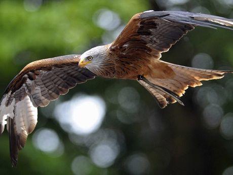Quan doi Phap dung ca chim ung de chong khung bo - Anh 1