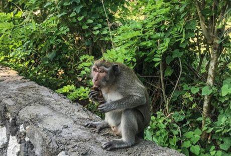 10 dieu can lam khi di du lich Bali - Anh 5