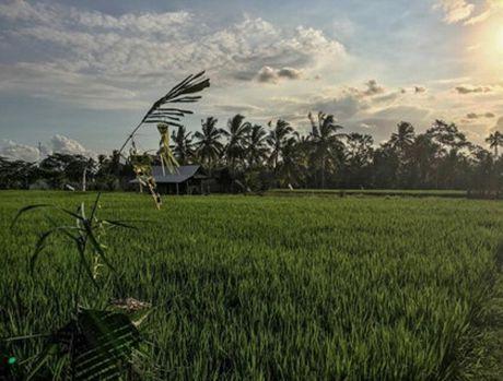 10 dieu can lam khi di du lich Bali - Anh 7