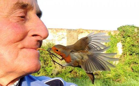 Nguoi dan ong gay sung sot khi mom cho chim an bang mieng - Anh 1