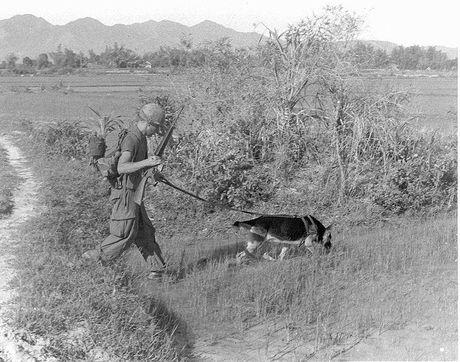 Chien truong Viet Nam va bi mat ve cac biet doi 'san nguoi' My - Anh 1