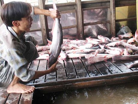 Ca Viet Nam xuat khau vao My phai co ten trong danh sach cua FSIS - Anh 1