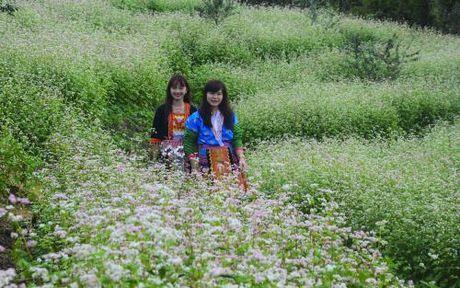 Vuon hoa tam giac mach tren dinh deo Pha Din - Anh 4