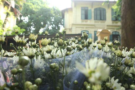 Chum anh: Cuc hoa mi diu dang xuong pho - Anh 10