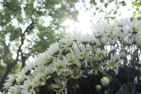 Chum anh: Cuc hoa mi diu dang xuong pho - Anh 2