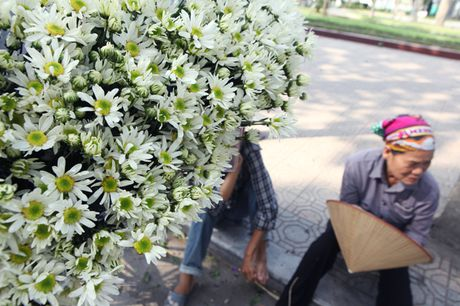 Chum anh: Cuc hoa mi diu dang xuong pho - Anh 5