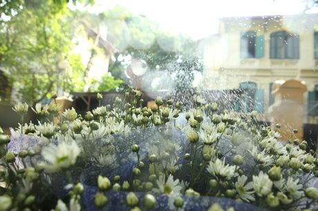 Chum anh: Cuc hoa mi diu dang xuong pho - Anh 6