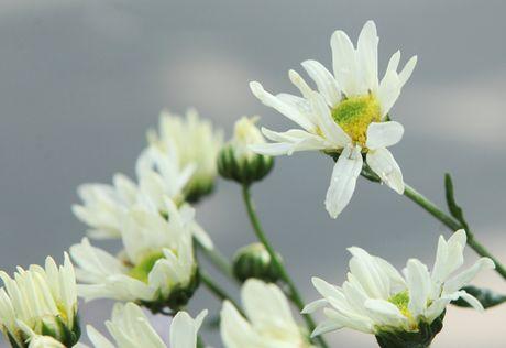 Chum anh: Cuc hoa mi diu dang xuong pho - Anh 9