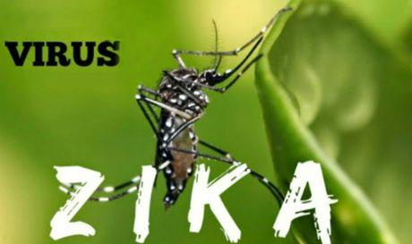 Zika khien WHO hop truc tuyen lan thu 5 - Anh 1
