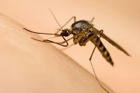 TPHCM: Zika xuat hien tai 3 quan huyen moi - Anh 1