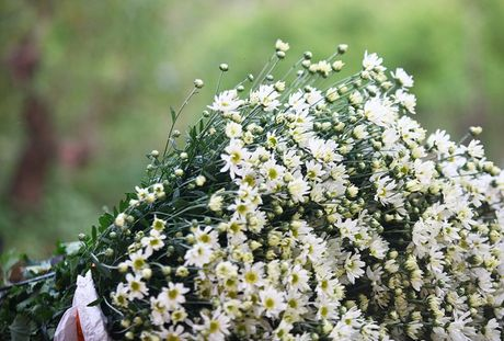 Cuc hoa mi, hoa dai giup nong dan doi doi - Anh 4