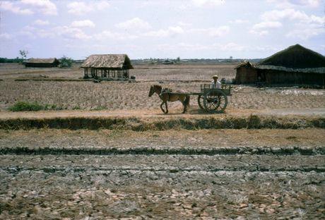 Anh doi thuong thu vi o Long An nam 1968 (1) - Anh 7