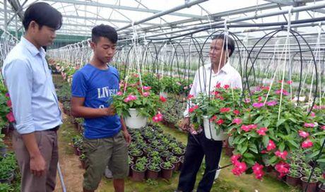 Vung chuyen canh hoa trai duoi chan Ba Na - Anh 1