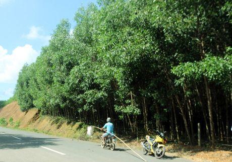 Nguoi dan san trung kien kiem tien trieu o Quang Nam - Anh 1