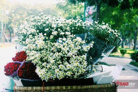 Ha Noi dau dong - mua hen cung cuc hoa mi - Anh 10