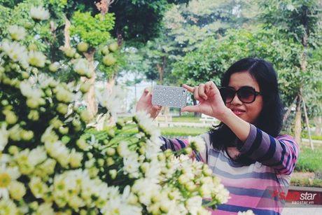 Ha Noi dau dong - mua hen cung cuc hoa mi - Anh 13