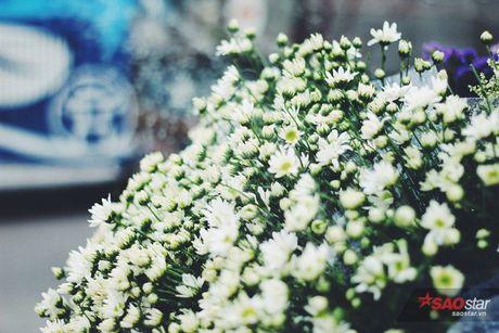 Ha Noi dau dong - mua hen cung cuc hoa mi - Anh 1